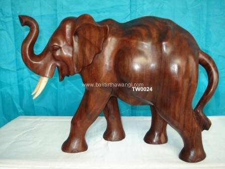 Elephant<br>TW0024