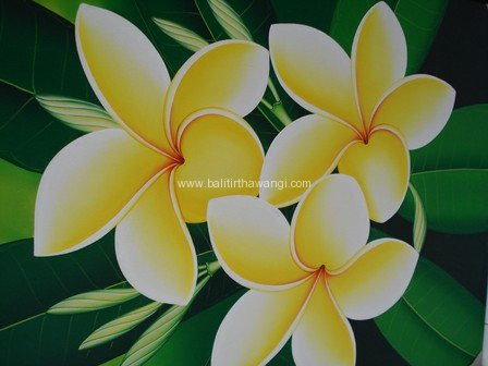 Frangipani Flower<br>MR013