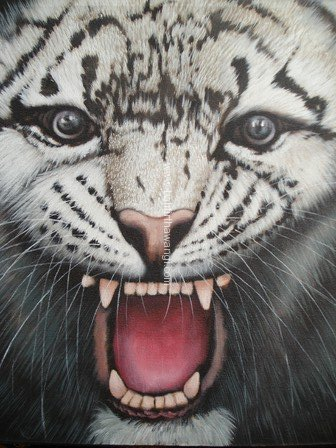 Tiger<br>MR036
