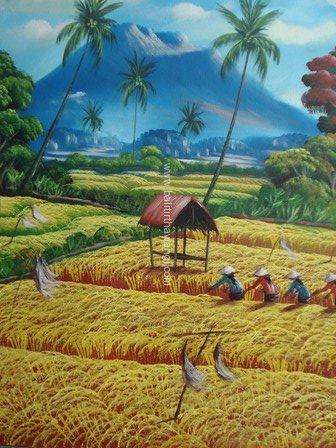 Rice Field<br>MR073