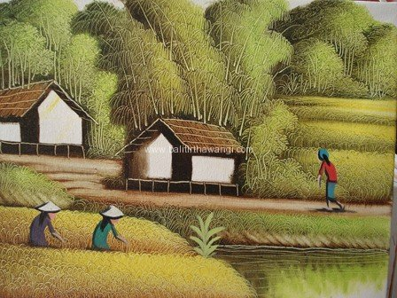 Rice Field<br>MR088