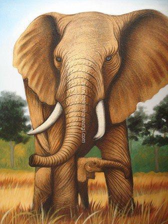 Elephant<br>MR117