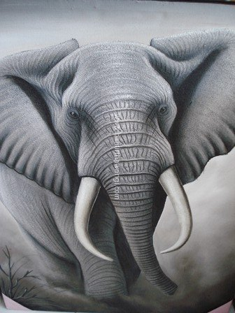 Elephant<br>MR118