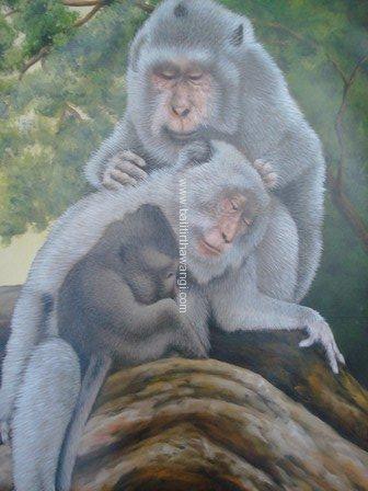 Monkey<br>MR120